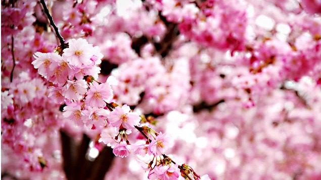 Blossom by angelina